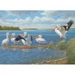 Puzzle  Cobble-Hill-51736 John Wilson : Pelicans