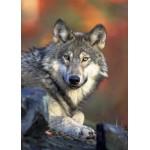 Puzzle  Grafika-Kids-00517 Loup
