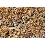 Puzzle  Grafika-Kids-01234 Pièces XXL - Coquillages et Etoiles de Mer