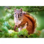 Puzzle  Castorland-27422 Pine Squirrel