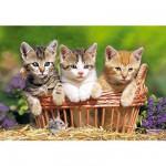 Puzzle  Castorland-51168 Trois adorables chatons