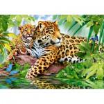 Puzzle  Castorland-52011 Jaguars au bord de la Rivière