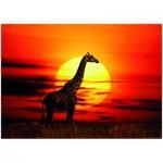 Puzzle  Heye-29688 Alex Bernasconi : Sunny Giraffe