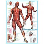 Puzzle  Eurographics-6000-2015 Système musculaire