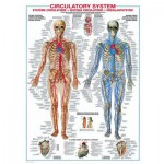 Puzzle  Eurographics-6000-4940 Le système cardiovasculaire