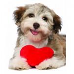 Puzzle  Eurographics-8104-0615 Chien avec coeur
