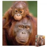 Puzzle  Eurographics-8104-0638 Orang-outan et son bébé