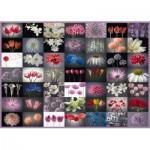 Puzzle  Schmidt-Spiele-58297 Collage Fleurs