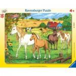 Ravensburger-06646 Puzzle Cadre - Chevaux dans l'Enclos