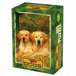DToys-50199-DG03 Mini Puzzle - Animaux domestiques - Couple de labradors