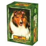 DToys-50199-DG04 Mini Puzzle - Animaux domestiques - Beau Shetland