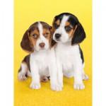 Puzzle  Clementoni-30356 Chiots beagles