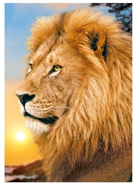 lion 500 teile trefl puzzle acheter en ligne. Black Bedroom Furniture Sets. Home Design Ideas