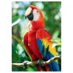 Puzzle  Trefl-10516 Ara rouge, Honduras