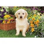 Puzzle  Trefl-37160 Petit labrador dans le jardin