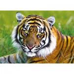 Puzzle  Trefl-37192 Tigre