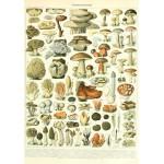 Puzzle  Grafika-00590 Illustration du Larousse : Champignons , XIXè Siècle