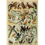 Puzzle  Grafika-00596 Illustration du Larousse pour Tous : Oiseaux , XIXè Siècle