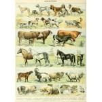Puzzle  Grafika-00598 Illustration du Nouveau Larousse Illustré : Mammifères , XIXè Siècle