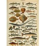 Puzzle  Grafika-00600 Illustration du Larousse pour Tous : Poissons , XIXè Siècle
