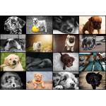 Puzzle  Grafika-01214 Collage - Chiens