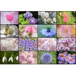 Puzzle  Grafika-01216 Collage - Fleurs de Printemps