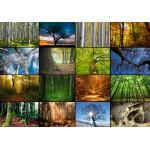 Puzzle  Grafika-01369 Collage - Arbres