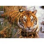 Puzzle  Nathan-87168 Tigre à l'affut