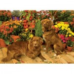 Puzzle  Cobble-Hill-51829 Duck Tollers