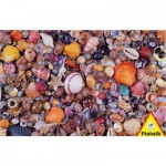 Puzzle  Piatnik-5663 Coquillages
