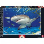 Puzzle  Educa-15972 Requin