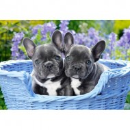 Puzzle  Castorland-104246 French Bulldog Puppies