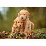 Puzzle  Castorland-52271 Puppy Love