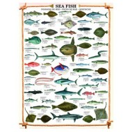 Puzzle  Eurographics-6000-0313 Poissons marins