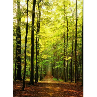 Puzzle Eurographics-6000-3846 Chemin forestier