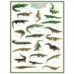 Puzzle  Eurographics-6000-4680 Crocodiles et Alligators