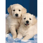 Puzzle  Ravensburger-14238 Chiots Golden Retriever