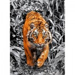 Puzzle  Clementoni-39429 Platinium Collection - Tigre