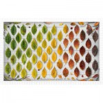 Pintoo-H2005 Puzzle en Plastique - The Colorful Season of Leaves