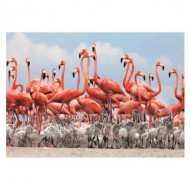 Puzzle  Dino-50250 Flamingoes