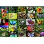 Puzzle  Grafika-01220 Collage - Papillons