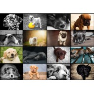 Puzzle  Grafika-T-00101 Collage - Chiens