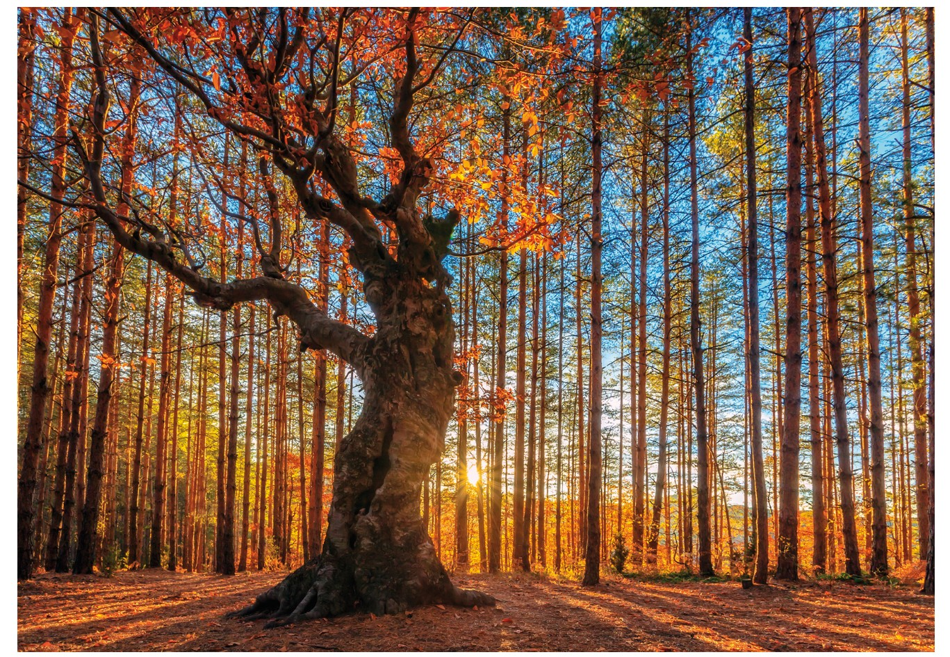puzzle-en-bois-the-king-of-the-forest