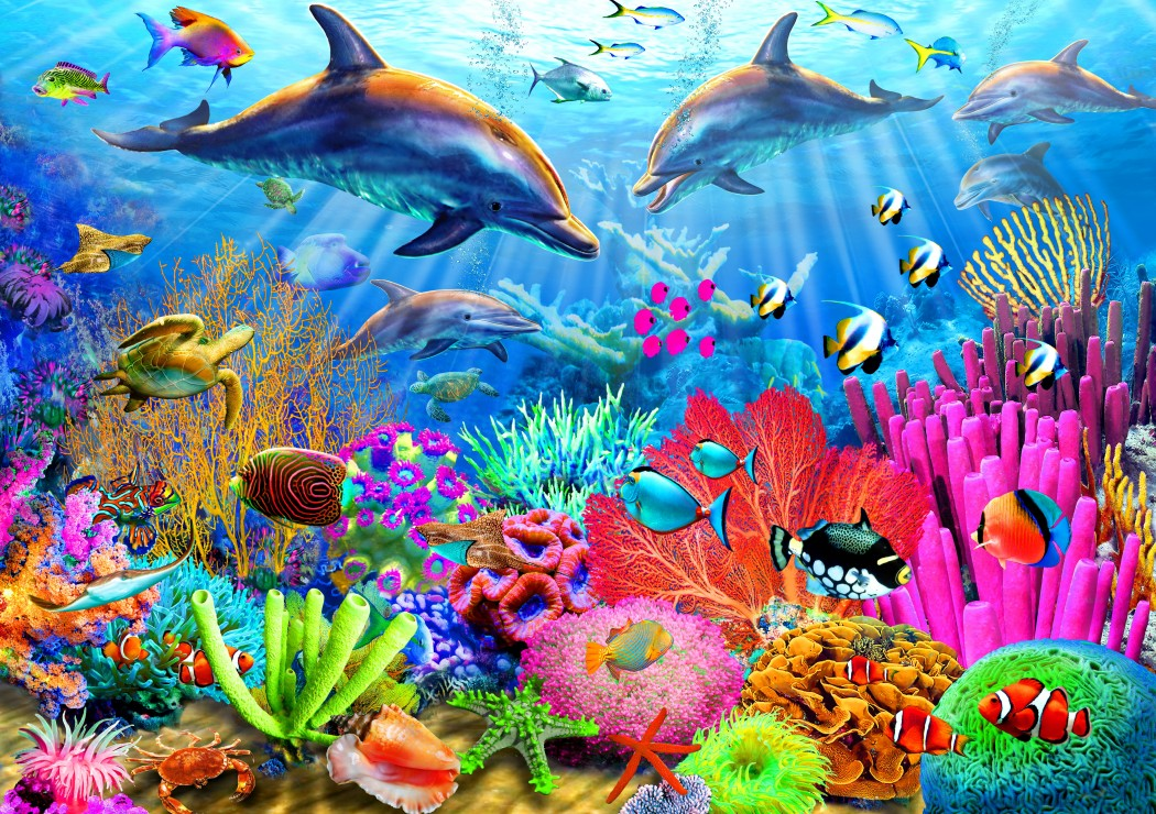 dolphin-coral-reef