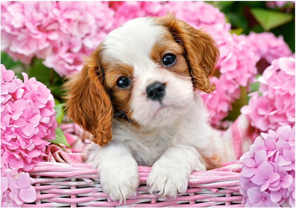pup-in-pink-flowers