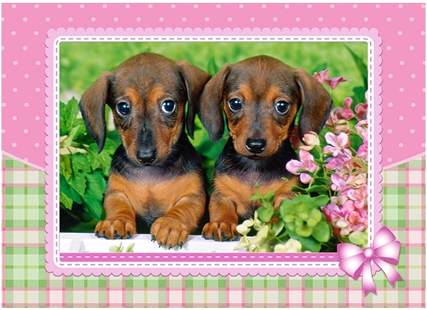 dachshund-puppies