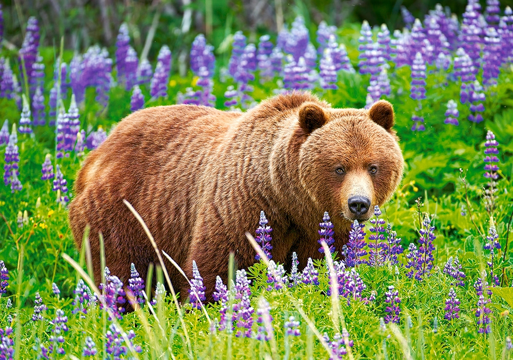 bear-on-the-meadow