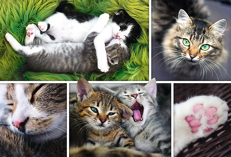 collage-chats