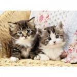Puzzle  Nathan-86766 Chatons