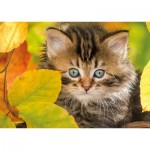 Puzzle  Nathan-87803 Chaton